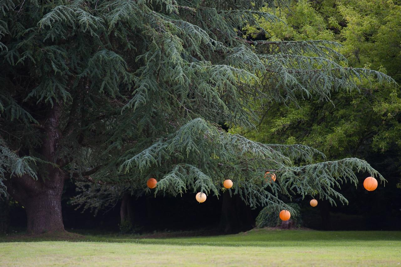 Lanternes orange accrochées sur un vieil arbre