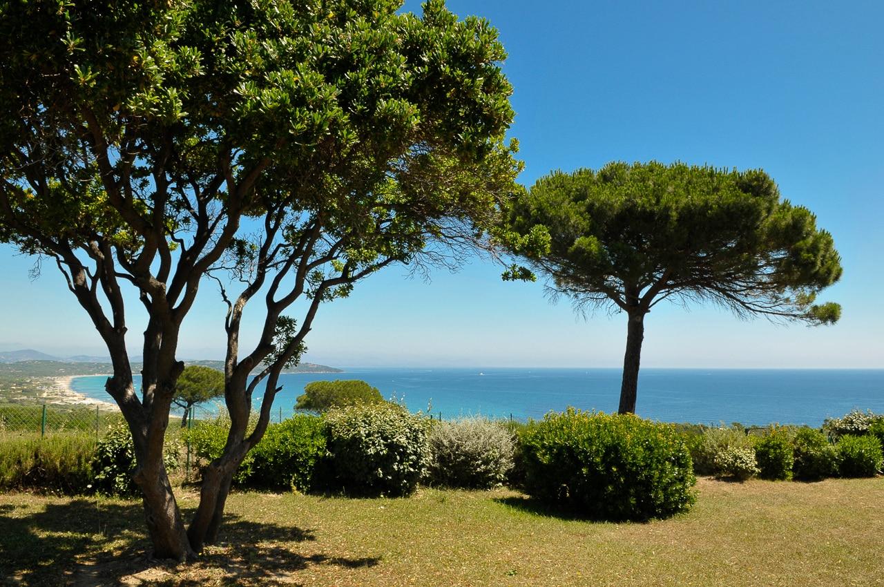 Vue sur la mer et les arbres