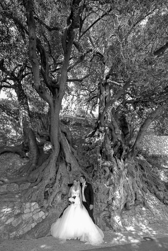 Mariés au pied d'un vieil arbre